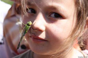 lili-et-libellulesign
